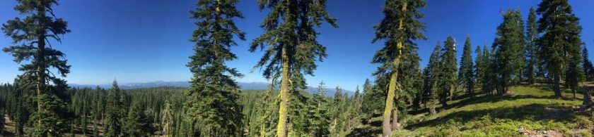 cropped-shasta_forest.jpg