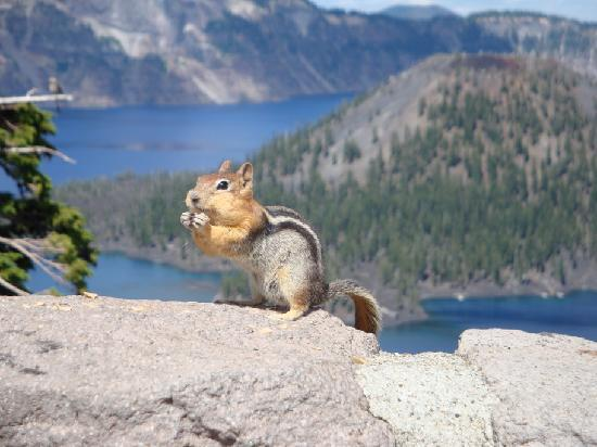 Chipmunks or Squirrels