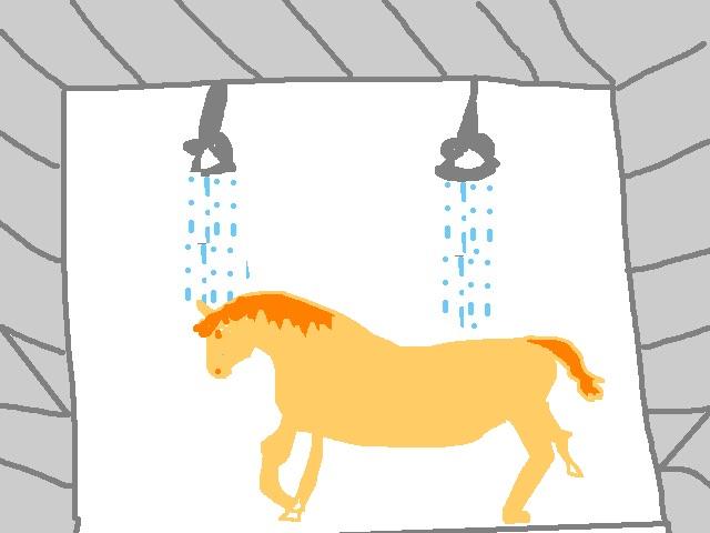 horse_shower.jpg