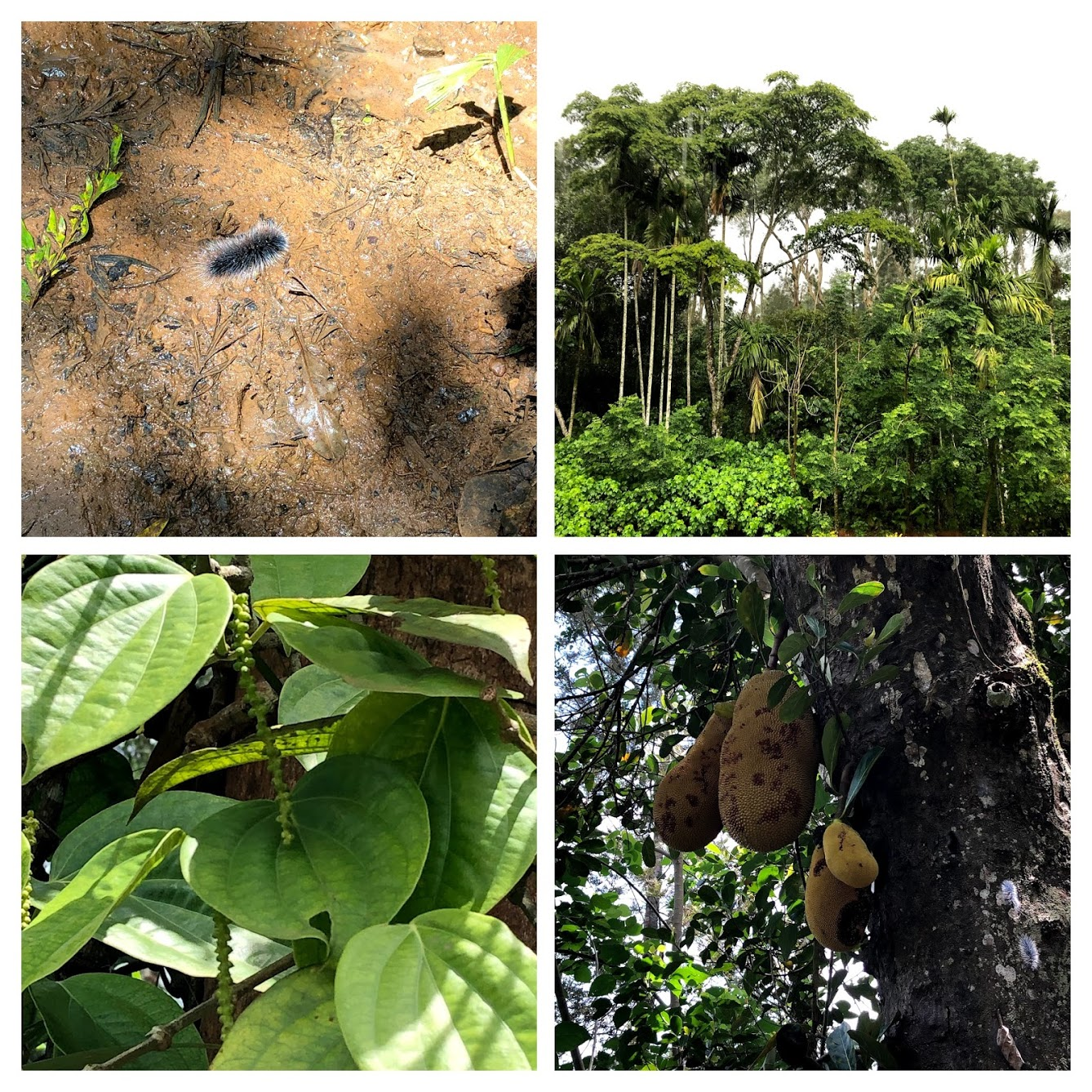 coorg-COLLAGE