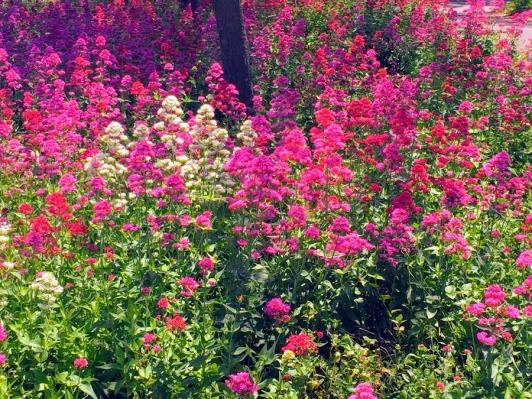 summer_blooms