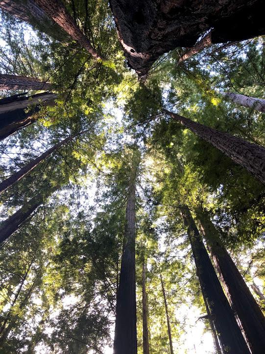 trees_komerabi