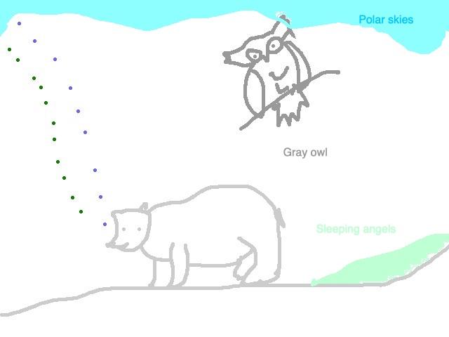owls_polar_bears